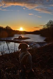 Cachorro encontra o amanhecer no lago