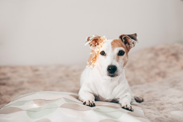 Cachorro engraçado com guirlanda de natal cintilante na cabeça, pronto para o baile de máscaras