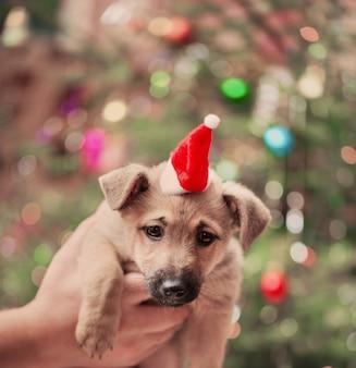 Cachorro engraçado na árvore de natal do fundo