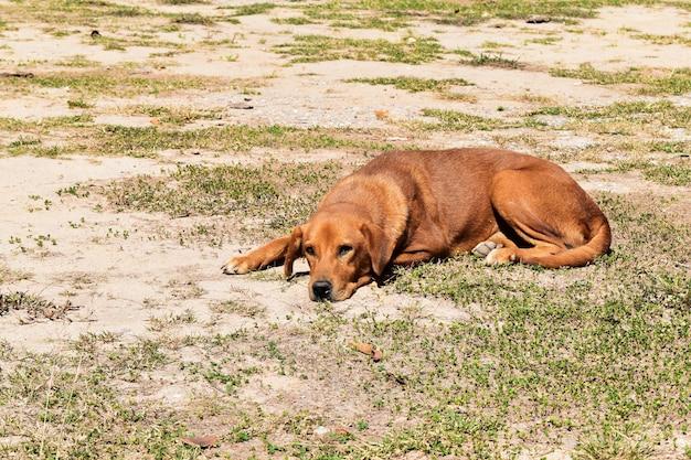Cachorro esperando no chão