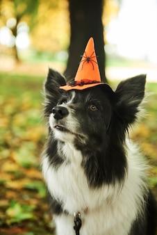 Cachorro está usando chapéu de bruxa