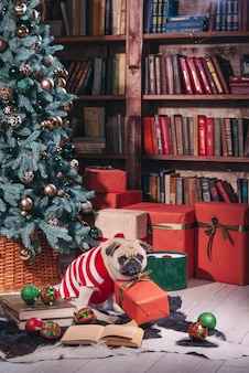 Cachorro fantasiado de papai noel sentado sob uma árvore de natal com presentes e um livro no estúdio