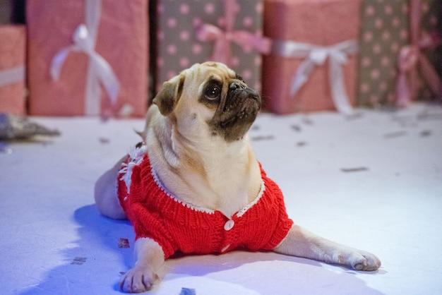 Cachorro fantasiado de papai noel sentado sob uma árvore de natal com presentes no estúdio