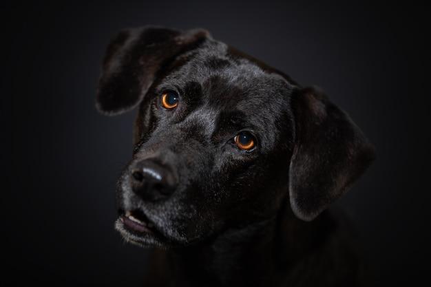 Cachorro fechando o retrato na parede escura