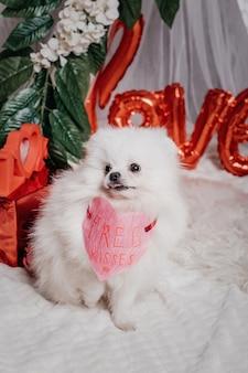 Cachorro feliz fofo branco (pomerânia) com coração de papel de beijos grátis