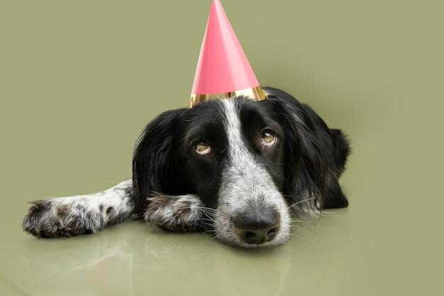 Cachorro festeiro triste com um chapéu de aniversário deitado sobre um fundo verde