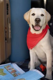 Cachorro fofo com bandana vermelha e vista frontal do mapa