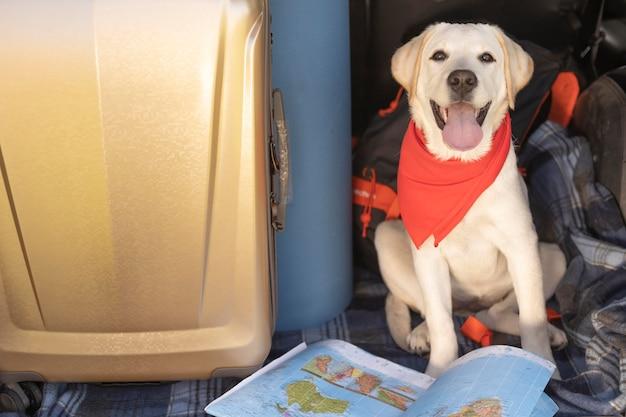 Cachorro fofo com bandana vermelha vista alta