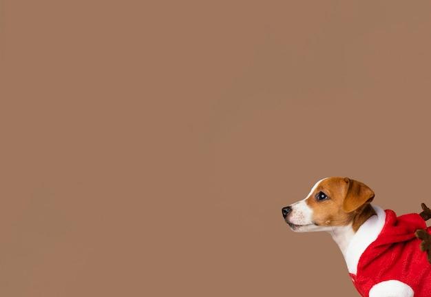 Cachorro fofo com fantasia e cópia-espaço