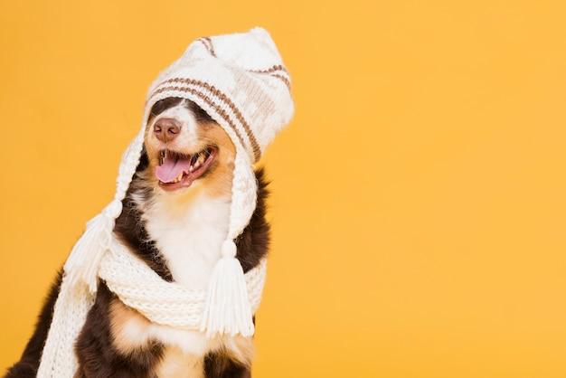 Cachorro fofo com um chapéu