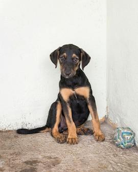 Cachorro fofo de resgate em abrigo esperando para ser adotado