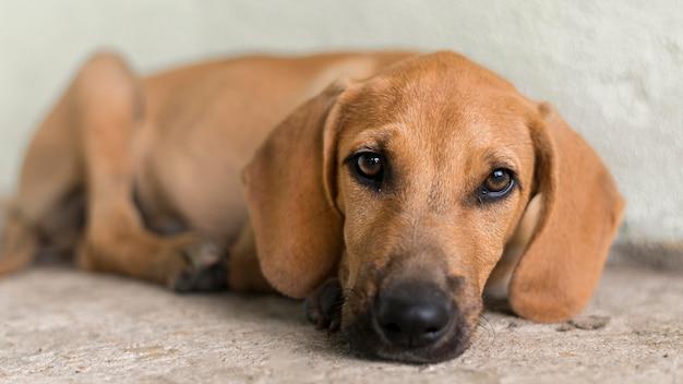 Cachorro fofo de resgate no abrigo esperando para ser adotado