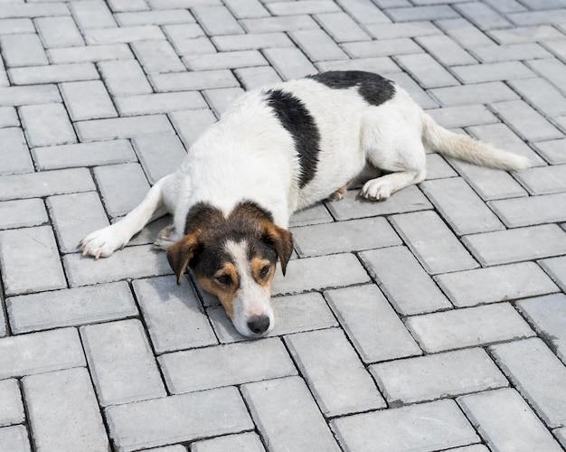 Cachorro fofo esperando do lado de fora para ser adotado por alguém
