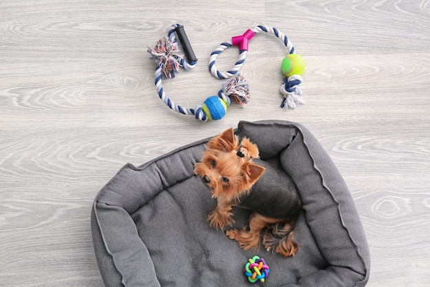 Cachorro fofo na cama do animal de estimação em casa