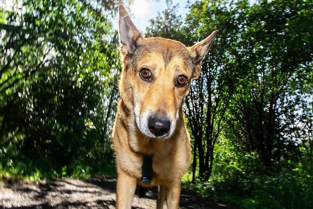 Cachorro fofo olhando para a câmera em pé no fundo desfocado de árvores e arbustos em um dia ensolarado