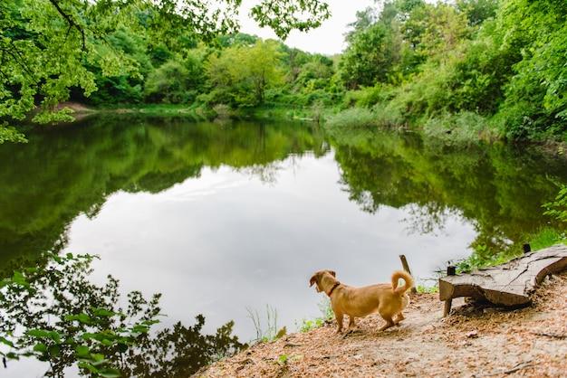 Cachorro fofo olhando para o lago