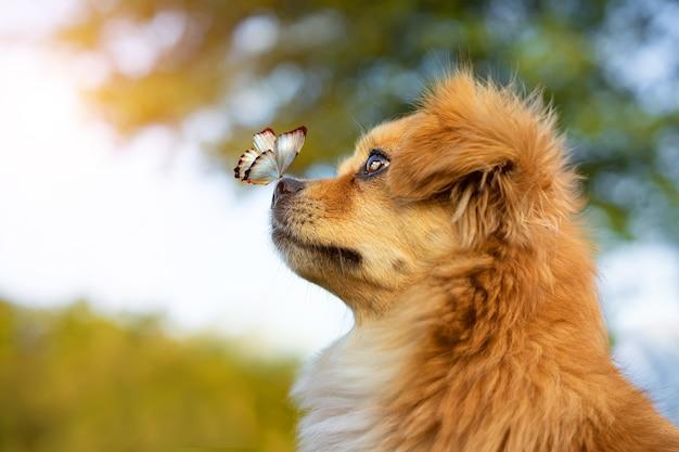 Cachorro fofo parado ao ar livre com uma borboleta no nariz