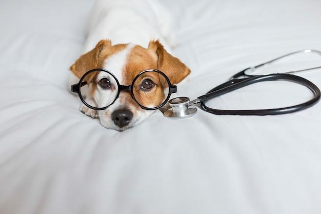 Cachorro fofo sentado na cama. usando estetoscópio e óculos. médico ou um conceito de veterinário