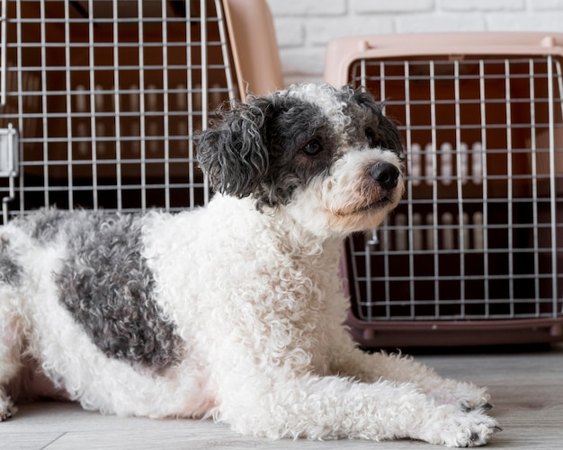 Cachorro fofo sentado perto de canis