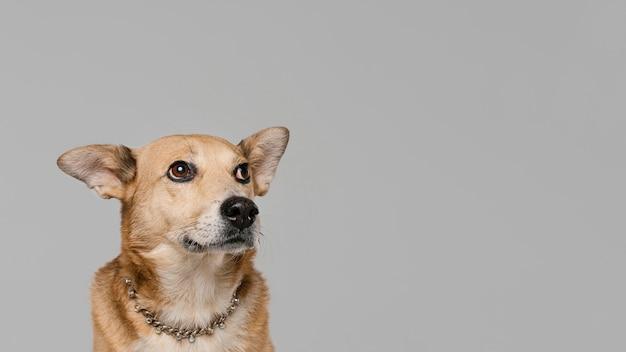 Cachorro fofo usando colar com cópia-espaço