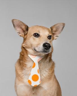 Cachorro fofo usando gravata pontilhada