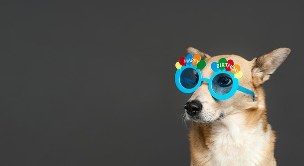 Cachorro fofo usando óculos azuis