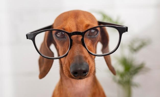 Cachorro fofo usando óculos