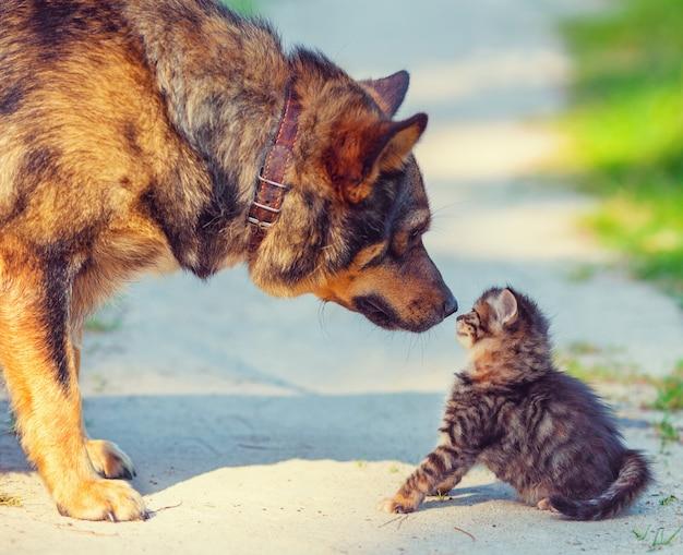 Cachorro grande e gatinho vadio se encontrando ao ar livre