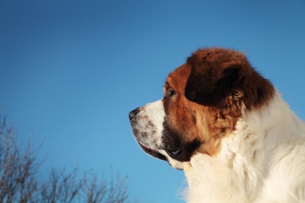 Cachorro grande em um fundo de céu azul