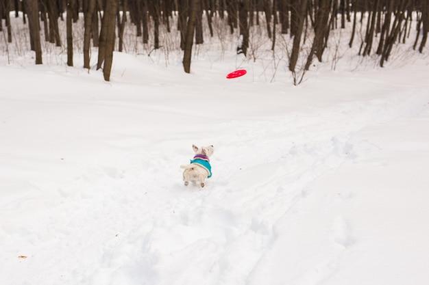 Cachorro jack russell terrier brincando no parque de inverno