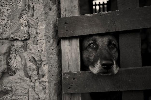Cachorro jovem olhando pela grade de uma jaula onde está trancado: o sofrimento de quem é privado de sua liberdade nas mãos de quem não pode respeitar os direitos dos outros.
