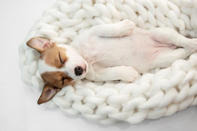 Cachorro jovem posando alegre.