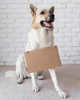 Cachorro lindo usando banner de papelão