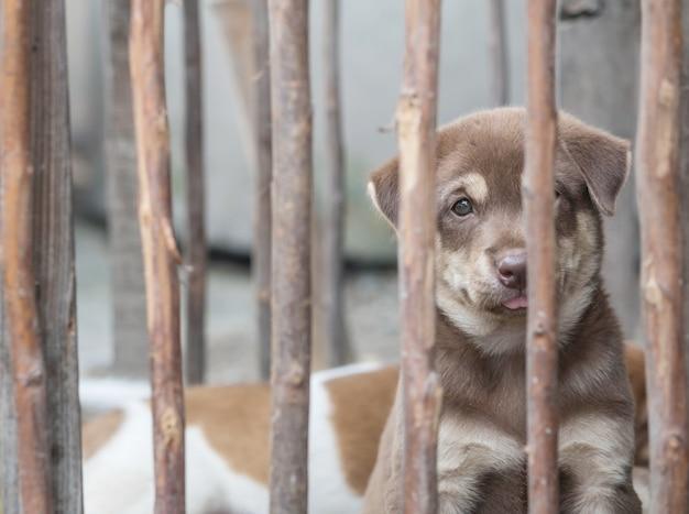 Cachorro marrom closeup em fundo de gaiola de madeira