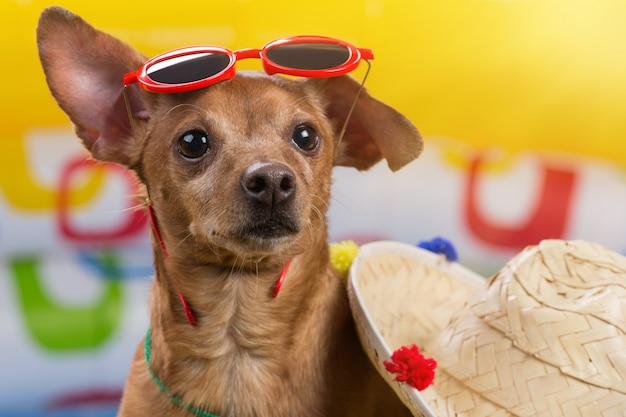 Cachorro marrom com óculos vermelhos na cabeça ao lado de um chapéu de palha