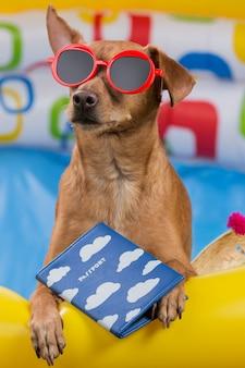 Cachorro marrom de óculos vermelhos com um passaporte nas patas senta-se em uma piscina inflável colorida