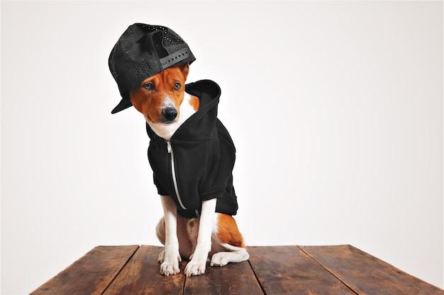 Cachorro marrom e branco estilizado com capuz preto e boné de caminhoneiro com malha nas costas em uma mesa de madeira rústica