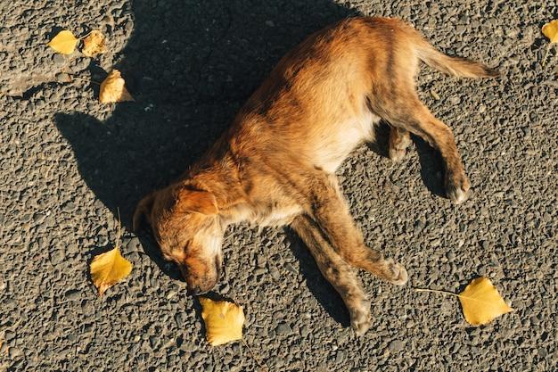 Cachorro marrom está dormindo na rua na luz solar quente.