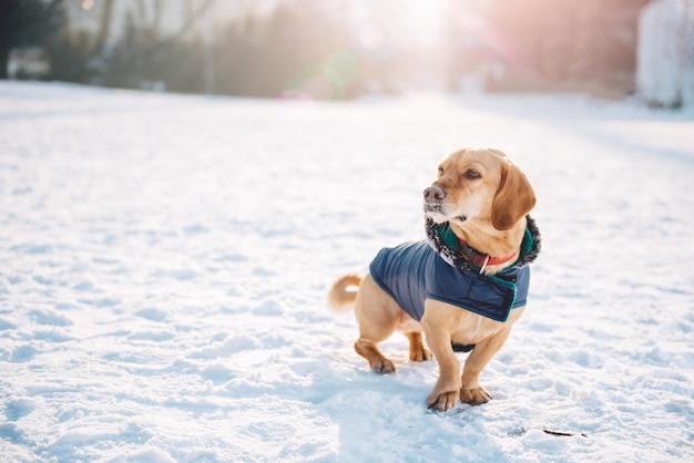 Cachorro na neve