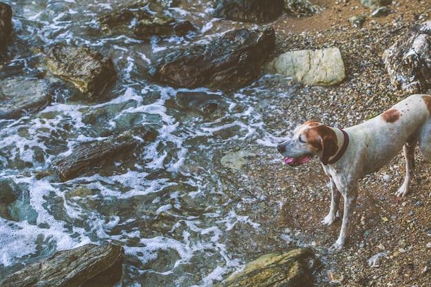 Cachorro na praia ao lado do mar