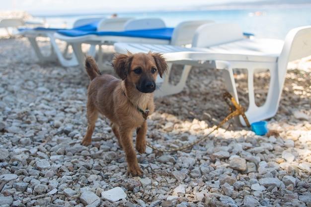 Cachorro na praia da costa do adriático