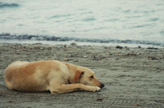 Cachorro na praia, horário de verão