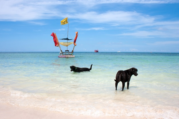 Cachorro no mar