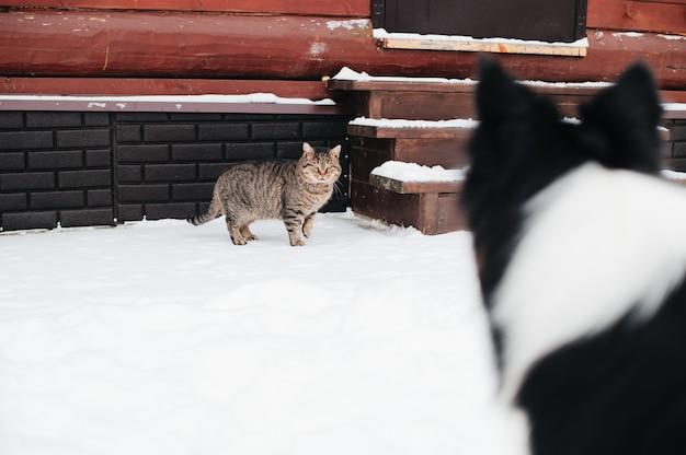 Cachorro olhando gato no inverno