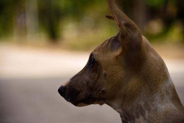 Cachorro olhando no fundo verde da natureza