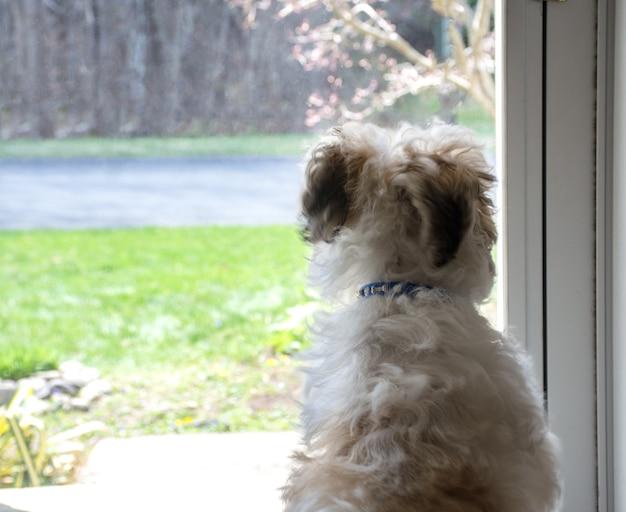 Cachorro olhando pela janela, cachorrinho esperando pelo dono