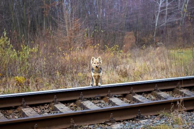 Cachorro parado na ferrovia esperando seu dono