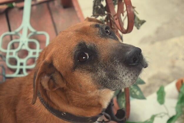 Cachorro parece nos olhos do proprietário