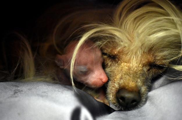 Cachorro peludo com um filhote recém-nascido