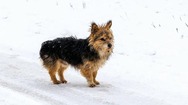 Cachorro peludo pequeno no inverno na neve